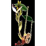 Huile essentielle de Cardamome bio (Elettaria cardamomum)