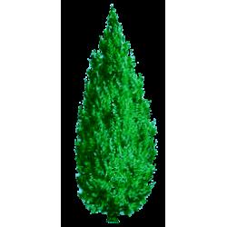 Huile essentielle Cedre Virginie Sauvage