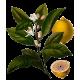 Huile essentielle Citron Bio*