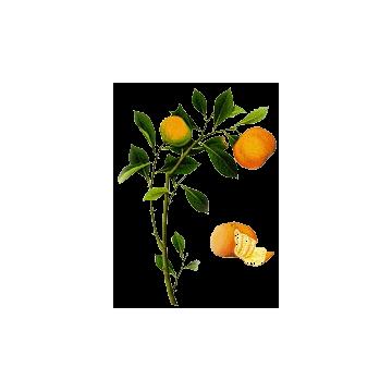 https://www.abcdelanature.com/2683-thickbox/huile-essentielle-clementine-bio.jpg