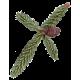 Huile essentielle d'Epinette Noire bio (Picea mariana Miller)