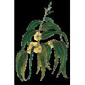 Huile essentielle Eucalyptus Globulus Bio*