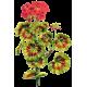 Huile essentielle Géranium Egypte bio (Pelargonium X asperum)