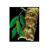 Huile essentielle Katafray sauvage (Cedrelopsis graveii Baillon)