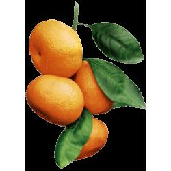 Huile essentielle Mandarine Verte Bio*