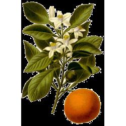 Huile essentielle Orange Douce Bio*