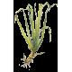 Huile essentielle Palmarosa bio (Cymbopogon martinii)