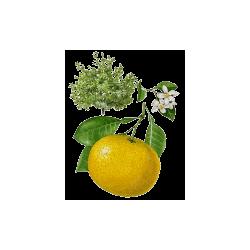 Huile essentielle Pamplemousse Blanc Bio*