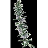Huile essentielle Romarin à verbénone bio (Rosmarinus officinalis)