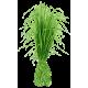 Huile essentielle Vétiver Bio (Vetiveria zizanioides)