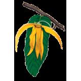 Huile essentielle Ylang-Ylang 3ème bio (Cananga odorata Hook)