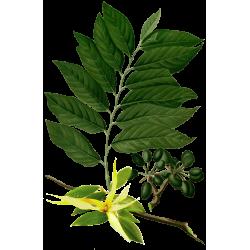 Huile essentielle Ylang-Ylang Complète Bio*