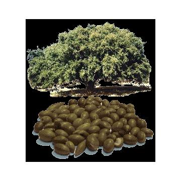 https://www.abcdelanature.com/2794-thickbox/huile-vegetale-argan-maroc-vierge-bio.jpg