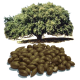 Huile végétale Argan Maroc Vierge Bio*