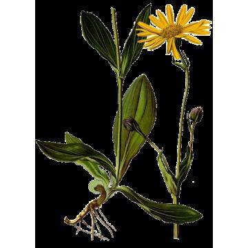 Huile végétale Arnica macérat Bio*
