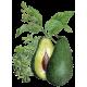 Huile végétale d'Avocat Vierge Bio*
