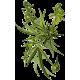 Huile végétale Chanvre Vierge Bio*