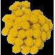 Huile végétale Helichryse macérat Bio*