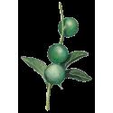 Huile végétale Macadamia Vierge Bio*