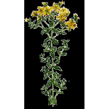 https://www.abcdelanature.com/2805-thickbox/huile-vegetale-millepertuis-bio.jpg