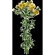 Huile végétale de Millepertuis macérat Bio*