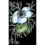 Huile végétale vierge de Nigelle Bio (cumin noir)*