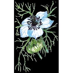Huile végétale Nigelle Vierge Bio*