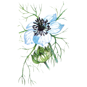 https://www.abcdelanature.com/2806-thickbox/huile-vegetale-nigelle-vierge-bio.jpg