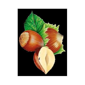 https://www.abcdelanature.com/2807-thickbox/huile-vegetale-noisette-vierge-bio.jpg