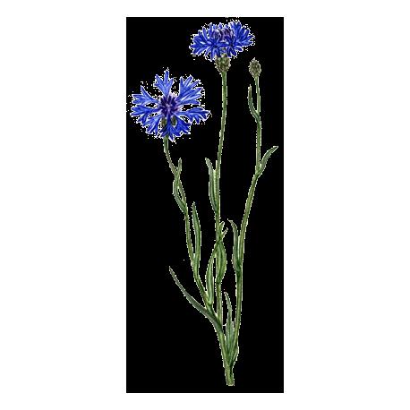 abc de la nature hydrolat bleuet fleurs. Black Bedroom Furniture Sets. Home Design Ideas