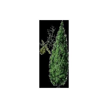 https://www.abcdelanature.com/2815-thickbox/hydrolat-cypres-bio.jpg