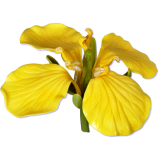 Glycérine végétale pour préparation cosmétique