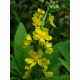 Aigremoine en gélules (Agrimonia eupatoria)