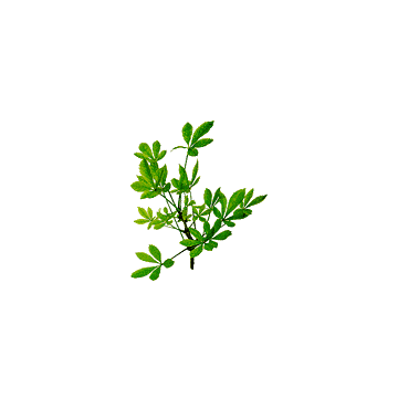 https://www.abcdelanature.com/3033-thickbox/eleutherocoque-bio-gelules-herboristerie.jpg