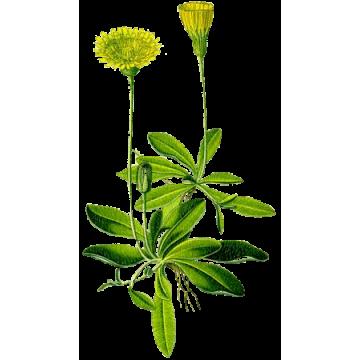 https://www.abcdelanature.com/3036-thickbox/piloselle-bio-gelules-herboristerie.jpg