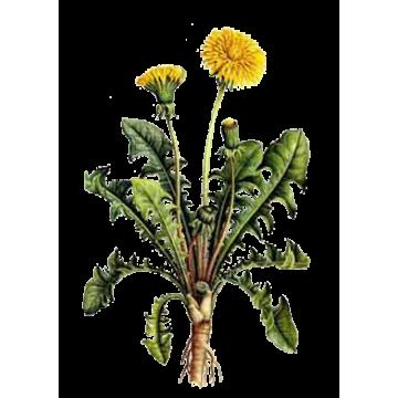 https://www.abcdelanature.com/3039-thickbox/pissenlit-bio-herboristerie.jpg