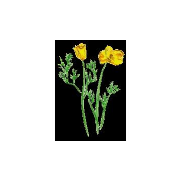 https://www.abcdelanature.com/3040-thickbox/escholtzia-bio-gelules-herboristerie.jpg