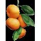 Huile essentielle Mandarine Rouge Bio*