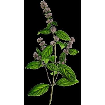https://www.abcdelanature.com/3050-thickbox/menthe-poivree-bio-gelules-herboristerie.jpg