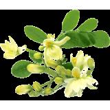 Moringa Bio en gélules *