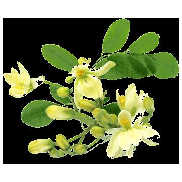 https://www.abcdelanature.com/3064-thickbox/moringa-bio-extrait-gelules-herboristerie.jpg