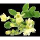 Moringa Bio en gélules - Défenses immunitaires