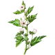 Hochet de Guimauve pour bébés et enfants (Althaea officinalis)
