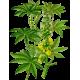 Huile végétale Ricin Vierge
