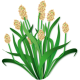 Psyllium blond BIO en gélules