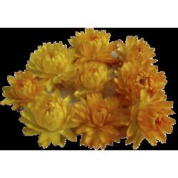 Huile essentielle Helichryse de Madagascar Bio*