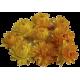 Huile essentielle Hélichryse de Madagascar Bio (Helichrysum gymnocephalum)