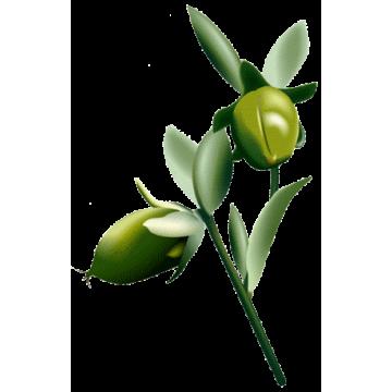 https://www.abcdelanature.com/3138-thickbox/huile-vegetale-jojoba-vierge-bio.jpg