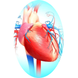 Cardiocool mélange en gélules Régénère
