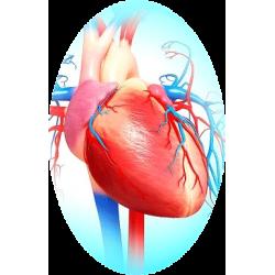 Cardiocool mélange en gélules